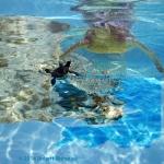 Turtle Island #6
