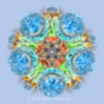 Monet's Mandala